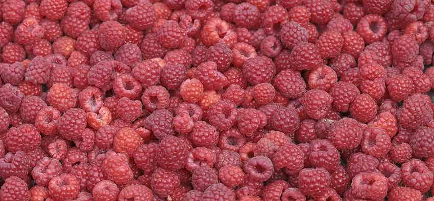raspberry_ketones