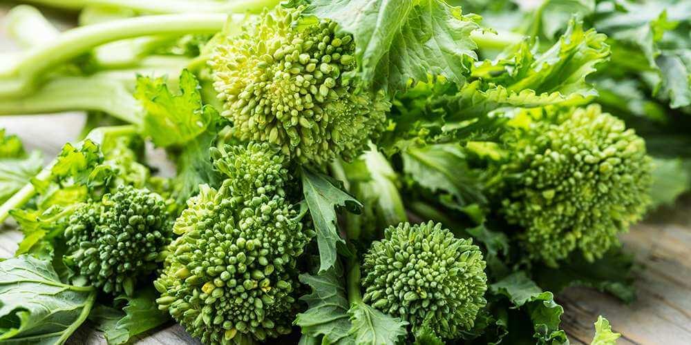 broccoli_rabe_rapini