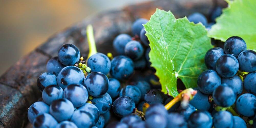 grapes_nutritional_info